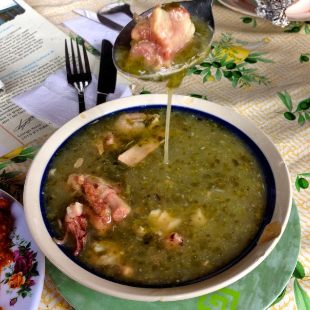 curacao-photos-catctus-soup