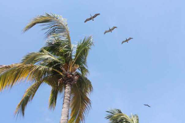puerto-vallarta-sun-birds