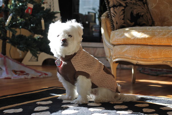 dog-christmas-gifts-sweater