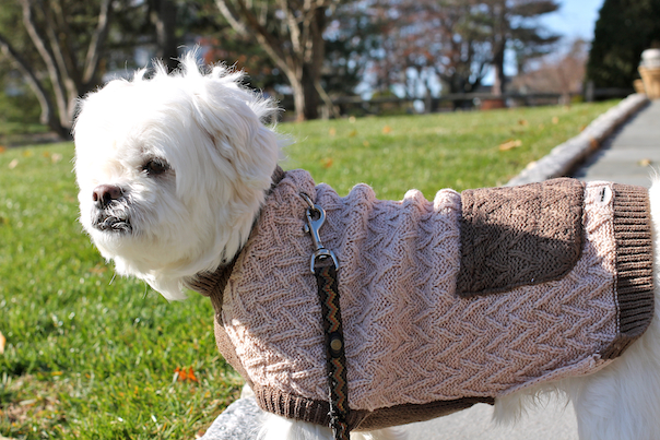 dog-travel-gifts-sweater