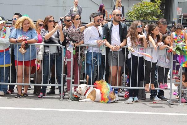 san-francisco-lgbt-pride-2015-18-parade
