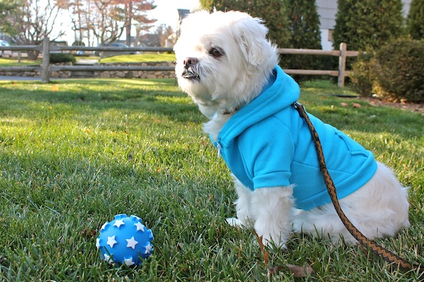 american-apparel-dog-hoodie-lazy-bonezz-ball